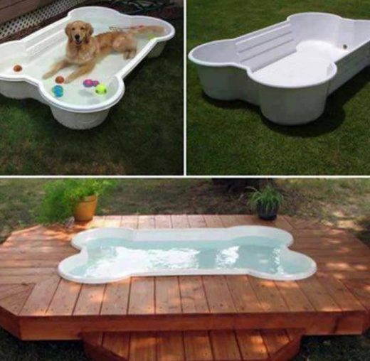 Bone Shaped Dog Pool