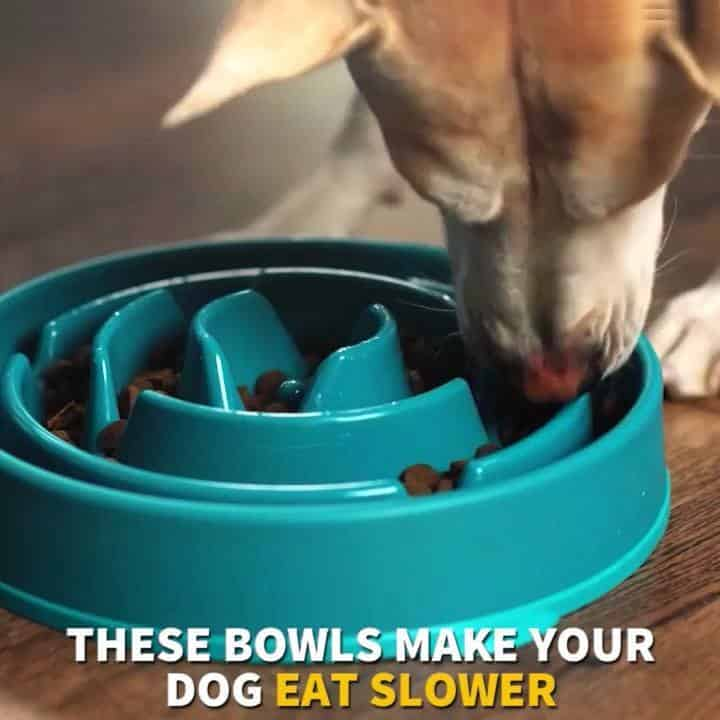 Outward Hound Dog Bowl