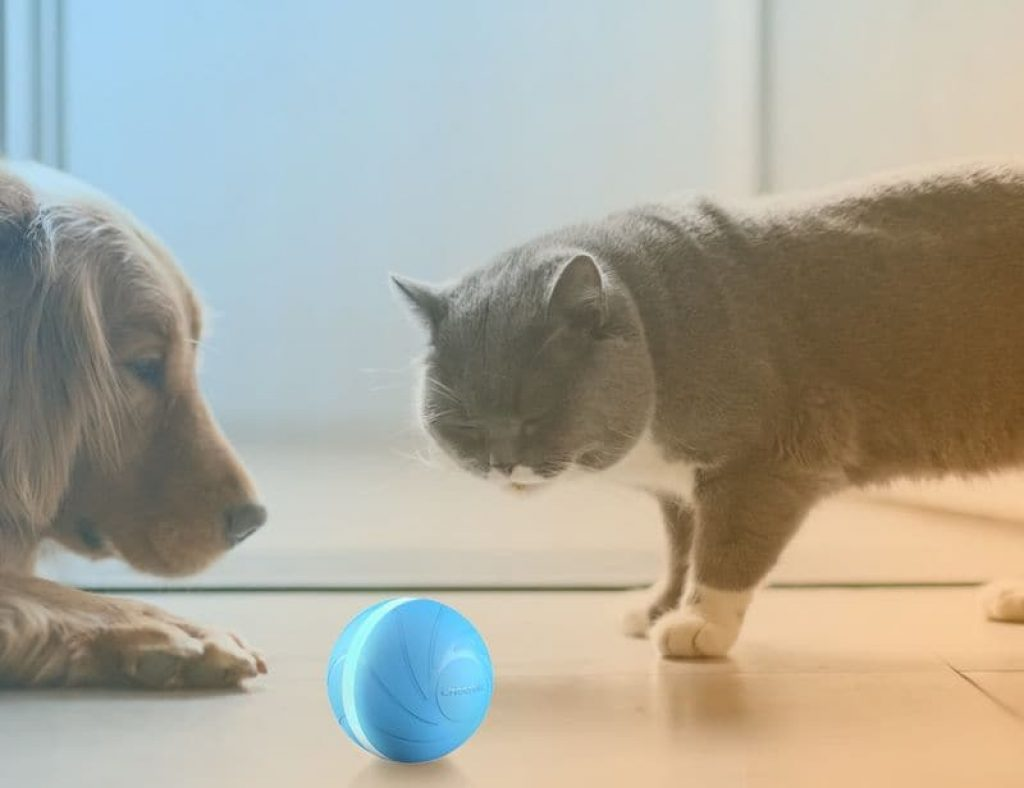 Bots dogs and cats can play with the Wicked Ball