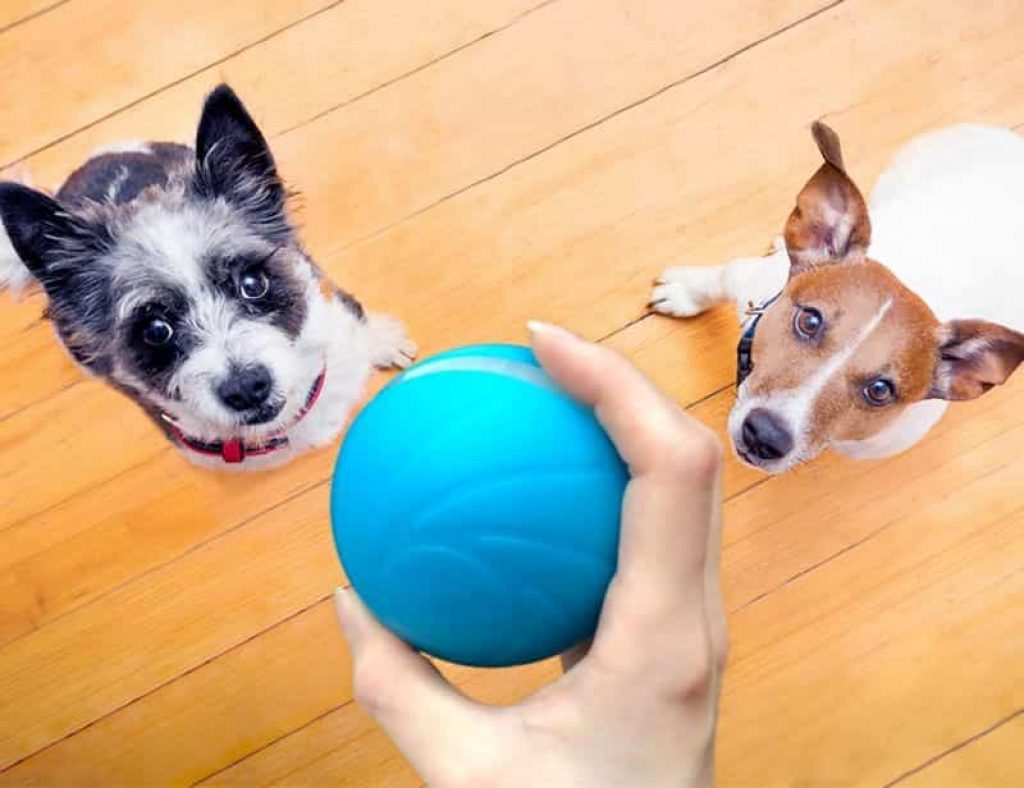 Smart Pet Toy will keep your dog entertained for hours